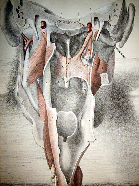 1867 huge medical dissection lithograph ear throat